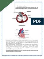 Esqueleto Cardiaco