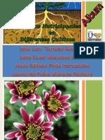 Album Nutricion Vegetal.pdf