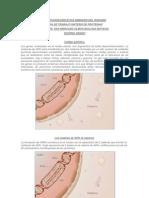 Guia Sintesis de Proteinas