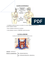 Glândulas...pdf