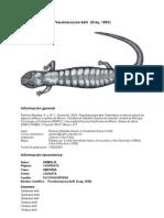 Pseudoeuryceabelli00