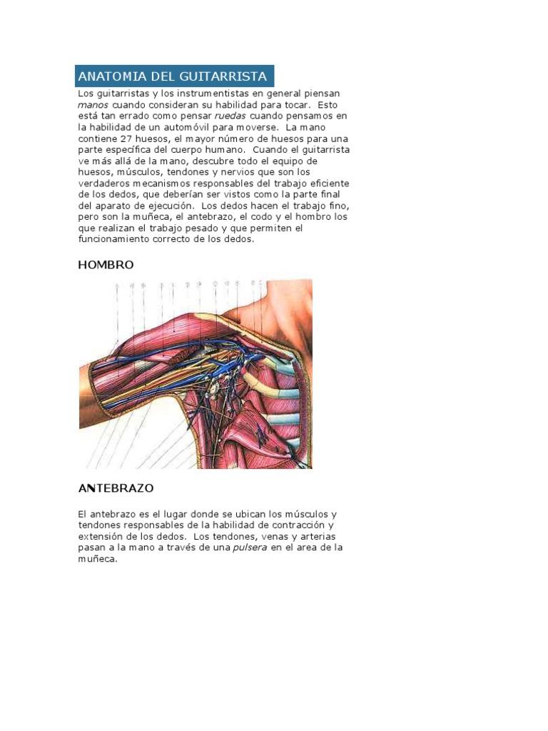 Anatomia Del Guitarrista