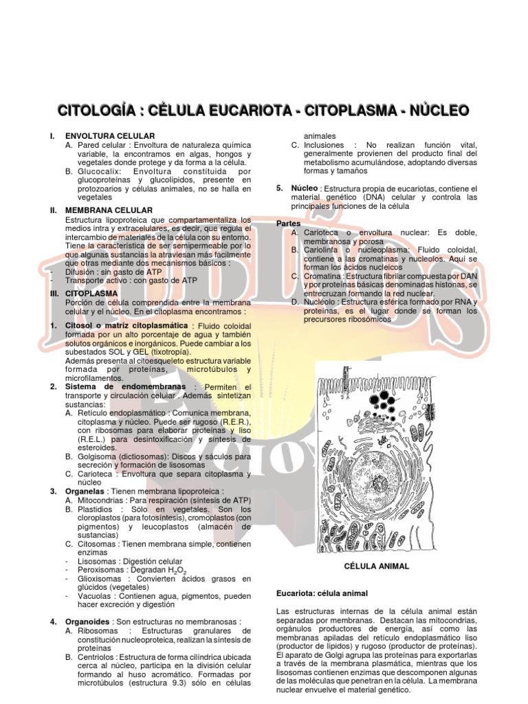 29934369 Citologia Celula Eucariota Citoplasma Nucleo