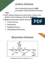 biosintesis