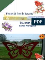 fluturisifloriinferestre