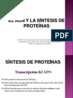 El ADN y La Sntesis de Protenas
