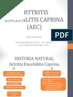 Arttritis Encefalitis Caprina