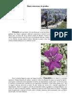 Plante Cataratoare de Gradina
