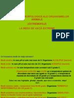 Curs 5 Ecomorfologie Presentation Medii Extreme