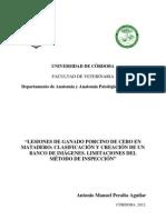 Lesiones Porcinos Banco de Imagenes