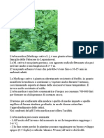 Erba Medica-medicago Sativa