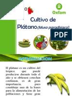 Cultivo de Platano
