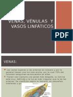 Venas, vénulas y vasos linfáticos