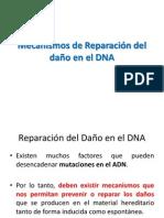 Mecanismos de Reparación del daño en el DNA 2013