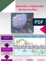 activacinymigracindeleucocitos1mayra-100716145917-phpapp01