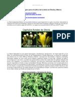 Paquete Tecnologico Cultivo Stevia Sinaloa Mexico