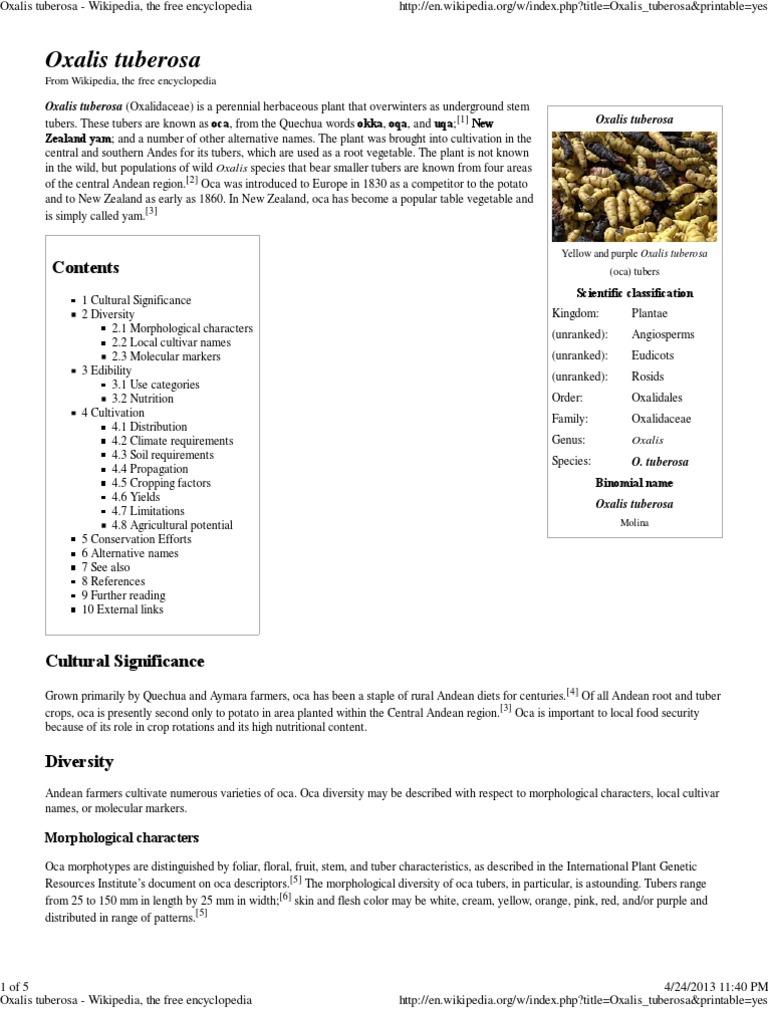 Oxalis Tuberosa Wikipedia The Free Encyclopedia