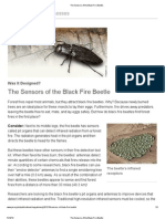 The Sensors of the Black Fire Beetle