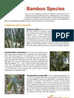 African Bamboo Species