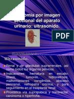 7.5 Anatomía por imagen seccional del aparato urinario  Ultrasonido.
