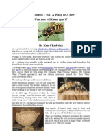 Pest Control – Is It A Wasp or A Bee