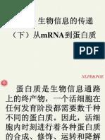 第四讲 生物信息的传递(下)—从mRNA到蛋白质