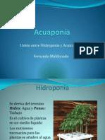 Presentacion Introduccion a La Acuaponia