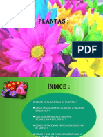 As Plantas - 6.º ano ppt