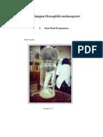 GENETIKA-Persilangan Drosophila Melanogaster.docx