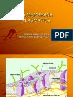 11 EstrucyFun-Membranas.pps
