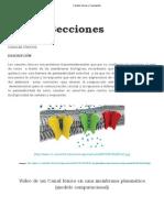 Canales Iónicos y Canalopatía