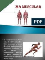 Sistema Muscular EXP