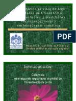 t17-07Tesis Regeneracion Invitro de 3 Varied a Des de Crisantemo