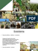 Flora y fauna en México