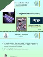 Citogenética básica 01 - Introdução à Citogenética