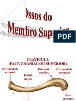 Ac Osseo Do Membro Superior