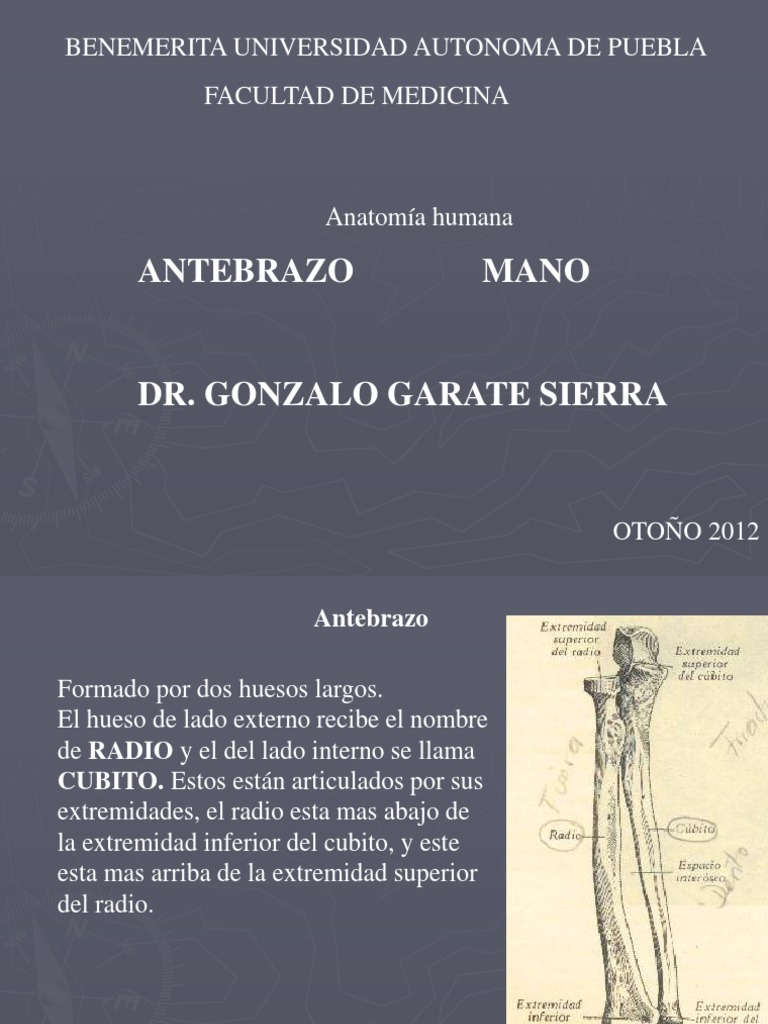 Anatomia Integral de Extermidades (Antebrazo)