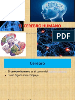 CEREBRO Cmc.ppt Good