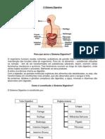 O Sistema Digestivo