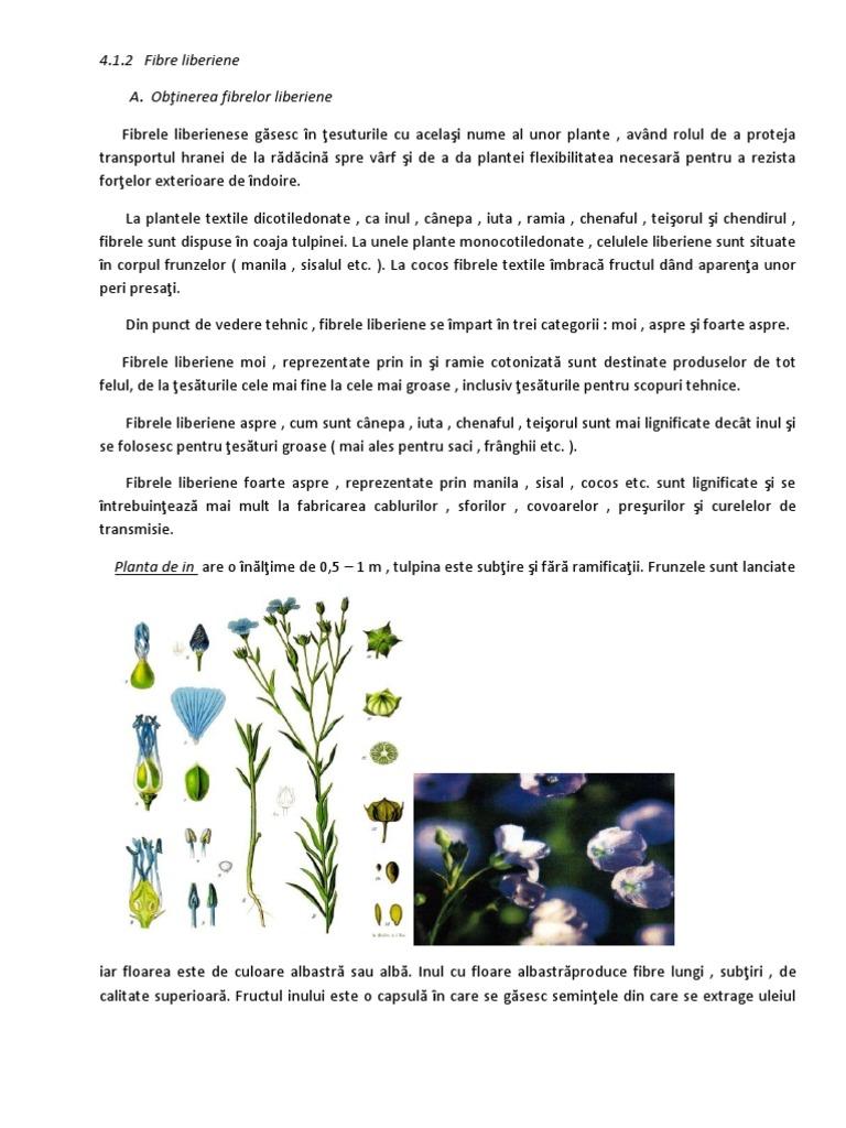 organismul original subțire din plante