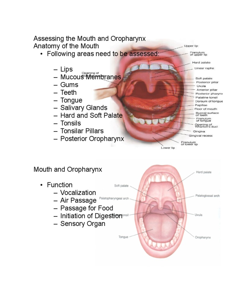 Assessing the Mouth and Oropharynx-Word