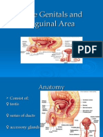 Male Genitals and Inguinal Area
