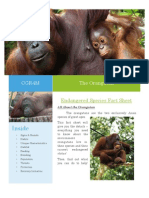 CGR4M Endangered Orangutans Fact Sheet