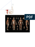 Man Anatomy and Physiology