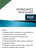 Biomecanica musculara