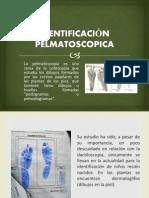 Pelmatoscopia Expo