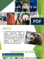 Animales en peligro de extinción en México-1-1