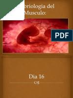Embriologia Del Musculo