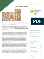 La visión transparente de la Amazonía | Diario de IQT