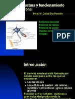 Estructura y Funcionamiento Neuronal
